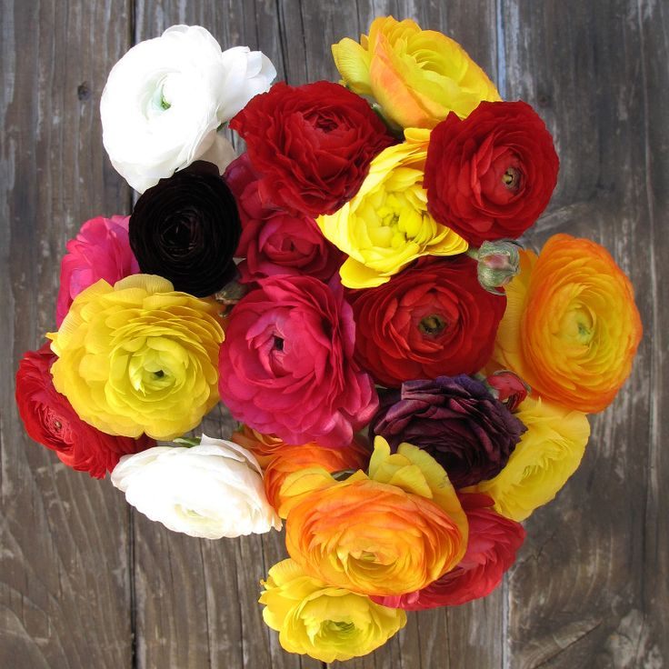 The Bouqs: Flowers Just Because #Flowers #Gifts #JustBecause