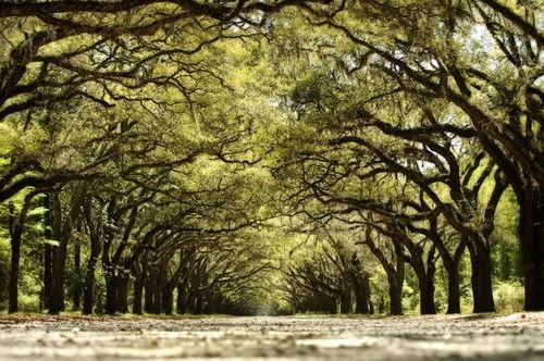 i want to visit Savannah, Georgia...love trees overhanging the street.