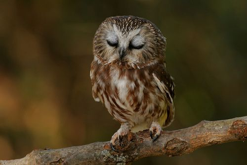 adorable owls | owl adorable