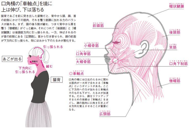 猫背姿勢であごを出し、黙々とデスクワーク。こんな生活習慣が、顔に「下方向」への力をかけ続け、たるみを加速させています。それに加えて、顔の筋肉組織は、筋膜のたるみが直接皮膚に反映されやすいという特徴も。たるみは加齢によるものだけでなく、姿…[5ページ目]