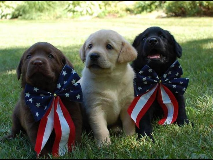 Dogs For Sale In Plattsburgh Ny