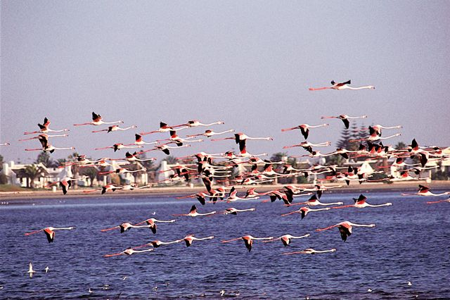 Walvis Bay Bird Count February 2013 - Travel News Namibia