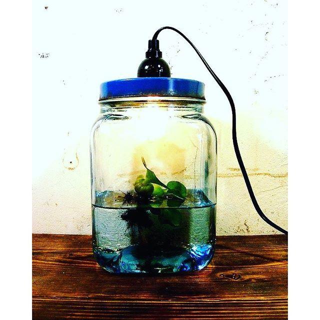 【pilliken_antique】さんのInstagramをピンしています。 《昭和30年代・ゆらゆらガラス・海苔瓶・青・小・ランプ(LEDフィラメント電球)です。アンティークのゆらゆらガラスと呼ばれる昔の斑のあるガラスの海苔瓶を使ってランプにリメイクしました。中に水を入れて浮草でアクアリウムとしてや、エアプランツなどの植物を入れても楽しめます。ご家庭のスイッチ付きでコンセントにそのまま取り付けることが出来ます。レトロな雰囲気で長寿命で省電力のLEDフィラメント電球付き。  #アンティークライト #アンティーク瓶 #ゆらゆらガラス #アクアリウム #観葉植物 #浮草 #海苔瓶 #アンティークデスクライト #水草 #古い器 #リメイク #昔 #ミルクガラス #レトロなライト #アンティークランプ #照明 #骨董 #LED #フィラメント電球》
