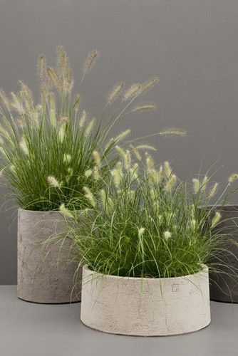 planters with grasses for the balcony