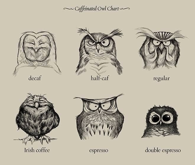 ...Owls are not what they seem...