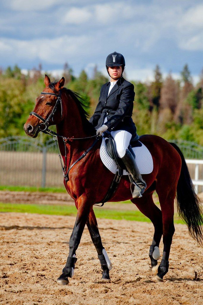 заниматься регулярно конным спортом