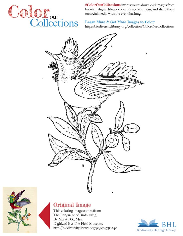 43 best BHL Coloring Pages images on Pinterest | Coloring, Original ...