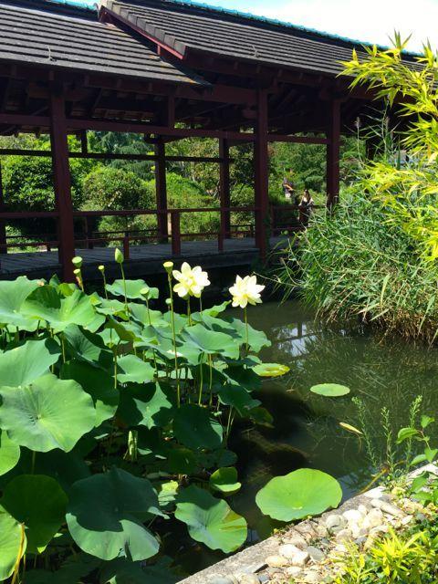 Jardin japonais sur l'Ile de Versailles