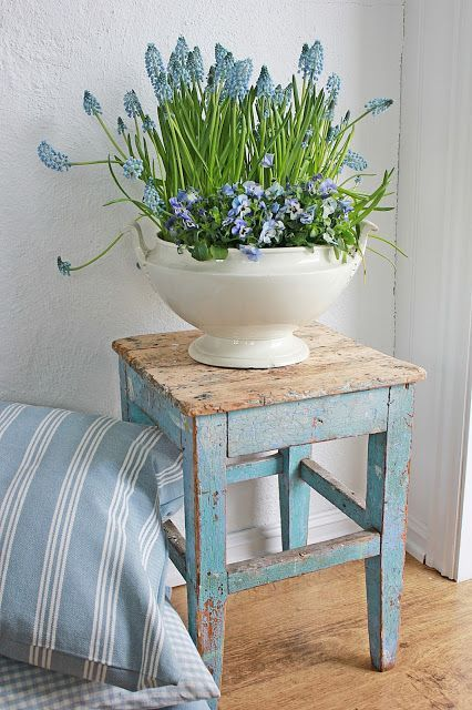 Spring blue Grape Hyancinths and Violas growing in white vintage porcelain soup tureen