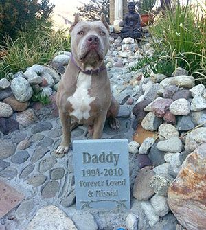 such an amazing dog....learned a lot from you Daddy!! tell Doobie, Sonny & Thor i'll see them at the bridge with arms wide open!!!!!!