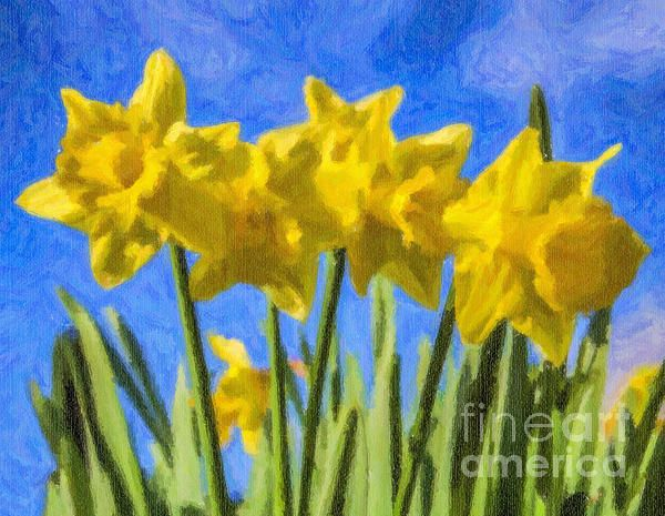 Daffodils growing against a blue sky.
