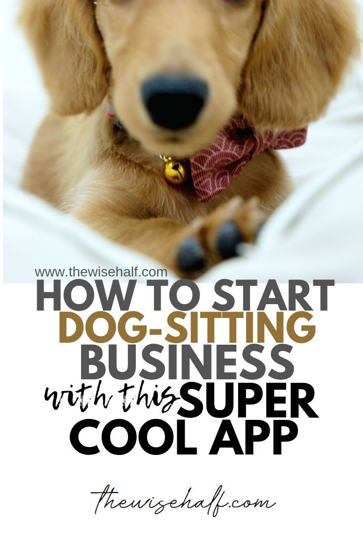 Get Paid Playing With Cats And Dogs With This Cool Pet Sitting App