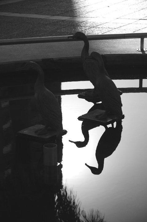 """Fuente de la Plaza 25 de Mayo ubicada en la esquina de San Jerónimo y Gral. López, con figuras de """"Biguá"""", aves típicas de la fauna autóctona santafesina, fueron hechas de metal en la marmolería Bossio Hno"""