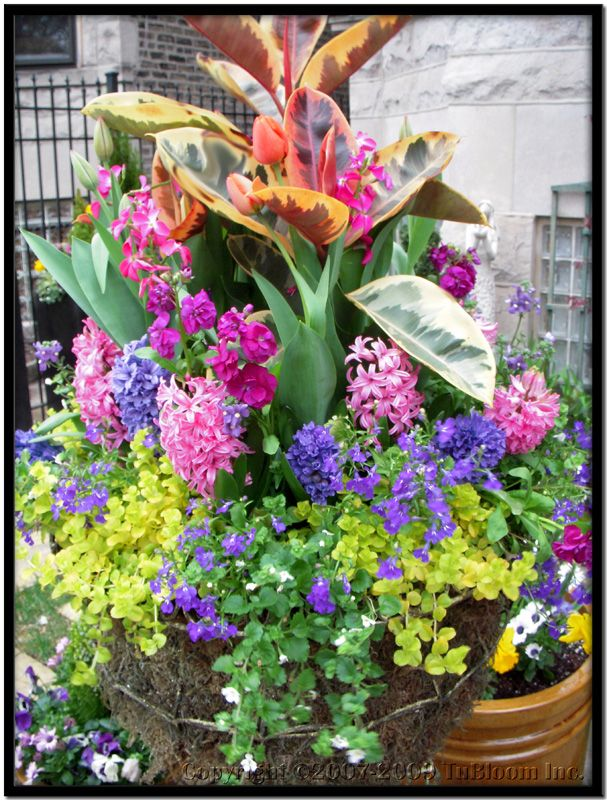 17 Best images about Flowers on Pinterest Container gardening