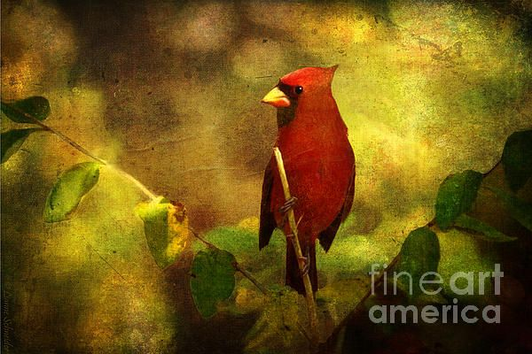 Cheery Red Cardinal - Digital Art by Lianne Schneider -  one in a series of eight paintings designed to look like woven tapestries.