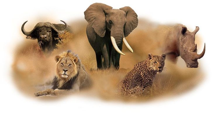 African Safaris and Adventures - See the BIG 5