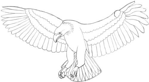 1. How to draw an eagle. STEP 17. Just like on the wing