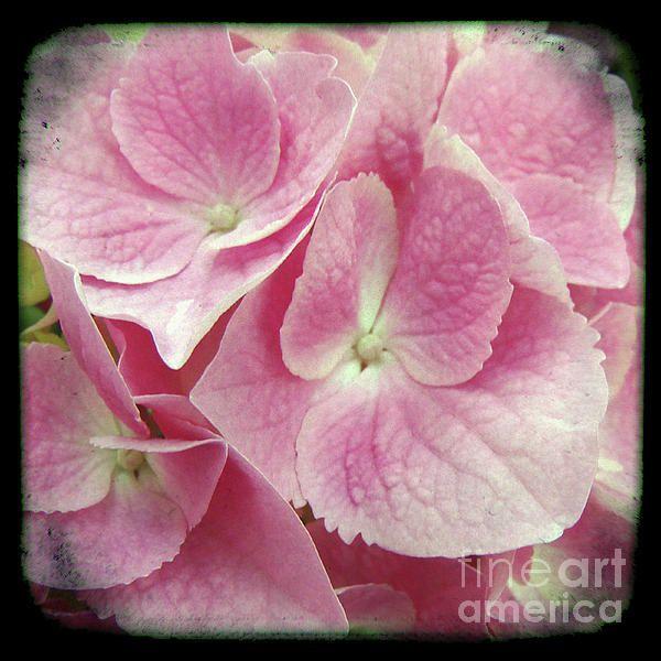 Photography Floral Art  Mixed Media  - Photography Floral Art  Fine Art Print