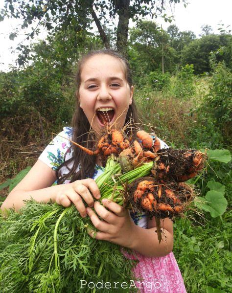 Carote dell'#ortosinergico #carrots #vegetables #ortaggi