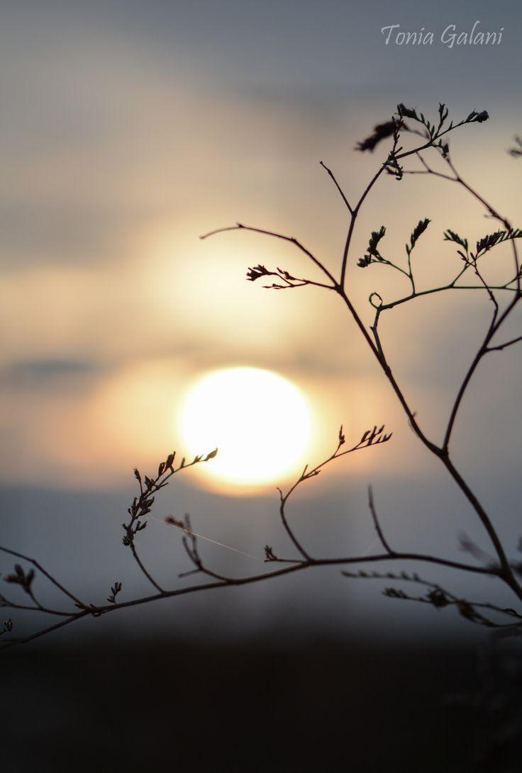 Evening sky...shades