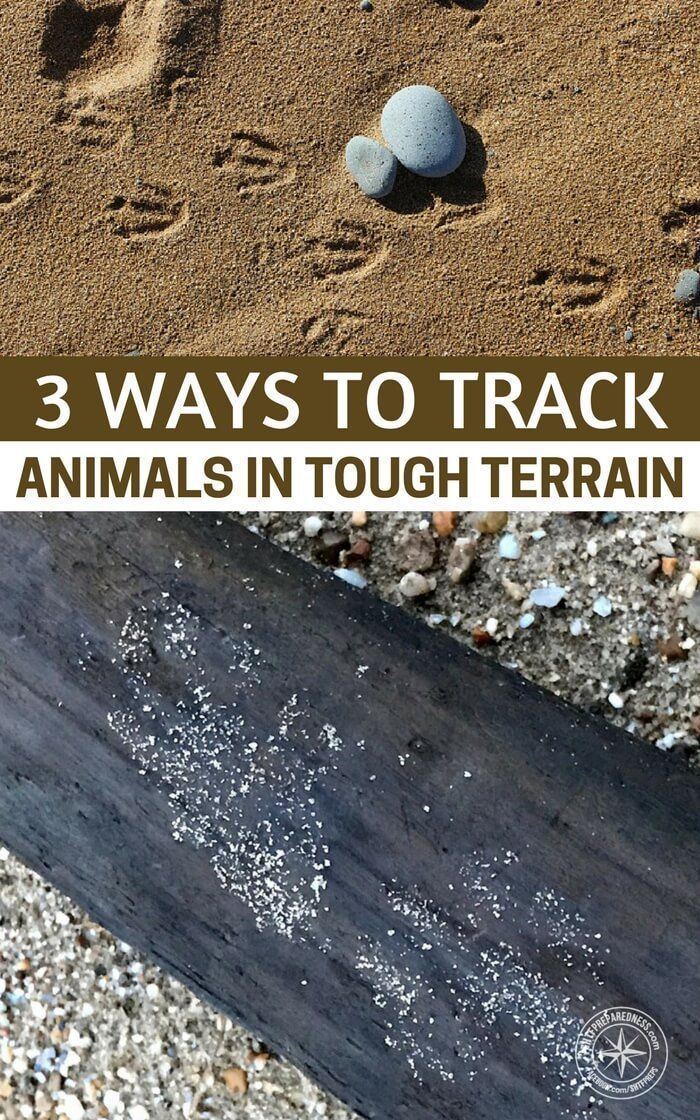 3 Ways to Track Animals in Tough Terrain – Tracking animals is an effective way to get a read on the area you are living in. If you have tracking skills you will be able to discern what type of wildlife are living in the area and what that means to your survival. #prepping #preparedness #prepper #shtf #survival #survivaltips #hacks #lifehacks #tracking #survivaltipsandtricks
