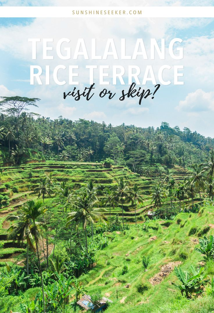 Tegalalang Rice Terrace in Ubud is one of Bali's most known tourist attractions…