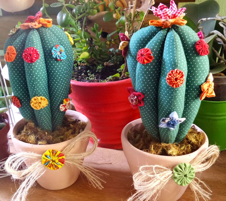 Cactus perfumados