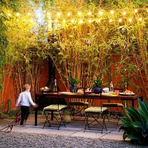 Clumping 'Alphonse Karr' bamboo hides the neighbors' roofs while string lights play up the plants' yellow-green foliage.