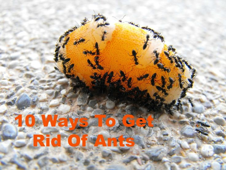 10 Ways To Get Rid Of Ants