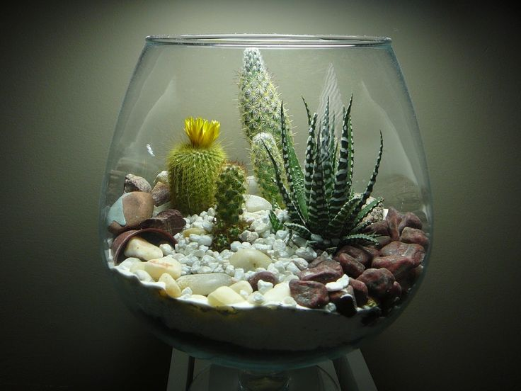 Great use of decorative pebbles, succulents and slow growing cacti in this terrarium