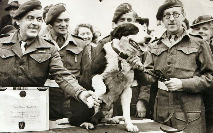 "Rob – a collie from the Special Air Service, received the award on 22 January 1945 ""Rob took part in landings during the North African Campaign with an Infantry unit and later served with a Special Air Unit in Italy as patrol and guard on small detachments lying-up in enemy territory. His presence with these parties saved many of them from discovery and subsequent capture or destruction. Rob made over 20 parachute descents.""Picture: PDSA"