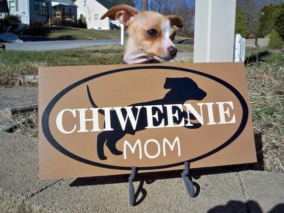 Chiweenie Signs  Mom Mom jordan shoes flight Sign  art  Chiweenie      Chiweenie and Mom Dog  Sign