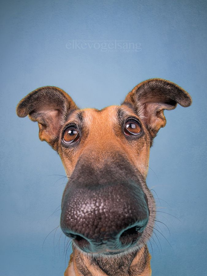 Don't call me big nose! - For licensing and print requests: info@elkevogelsang.com