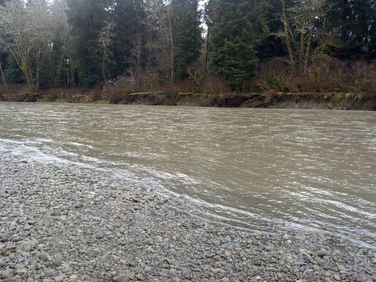 504 melhores imagens sobre camping fishing no pinterest for Washington river fishing reports