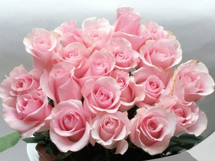 Find This Pin And More On Roses Pink