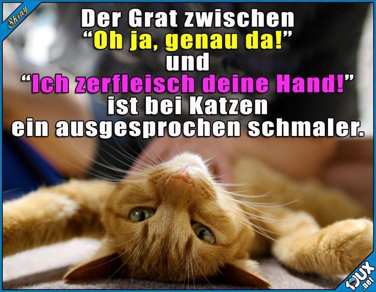 Ein sehr schmaler Grat ^^' https://de.1jux.net/531220?l=0&t=1  #Katzen #Katze #Stubentiger #Humor #sowahr #trotzdemsüß #Sprüche #lustigeSprüche #lustigeBilder