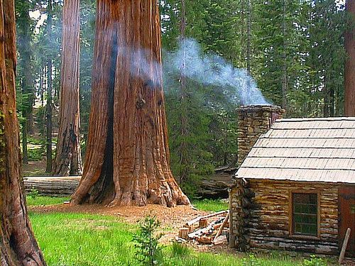 Redwood Forest Cabin, California
