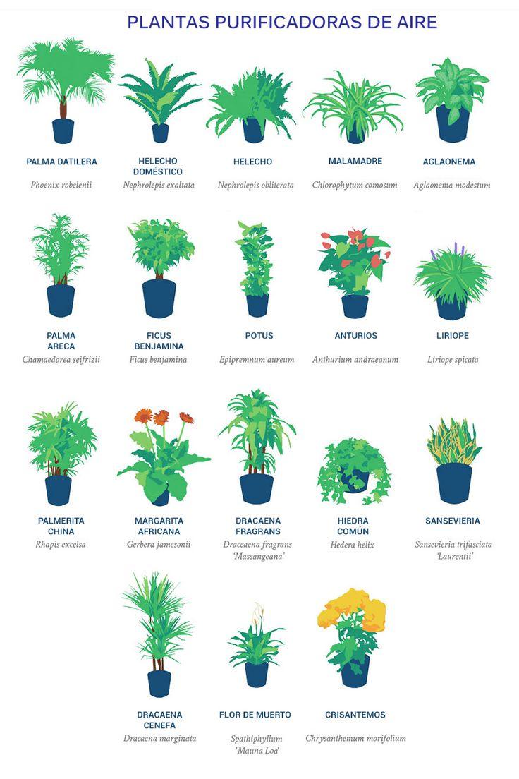 La NASA publicó una lista de las mejores plantas purificadoras de aire. ¡Ellas deben estar en cada apartamento!