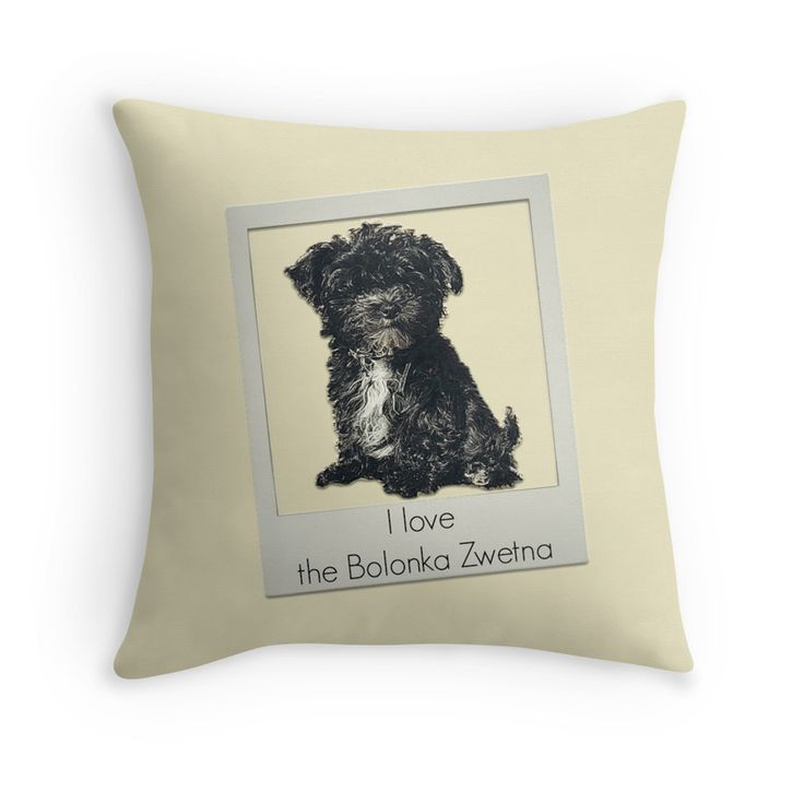 Bolonka Zwetna love pad. This little dog on the cushion can be ordered at: https://www.redbubble.com/people/bbrigitte/works/23526786-bolonka-in-cream?p=throw-pillow&ref=artist_shop_grid