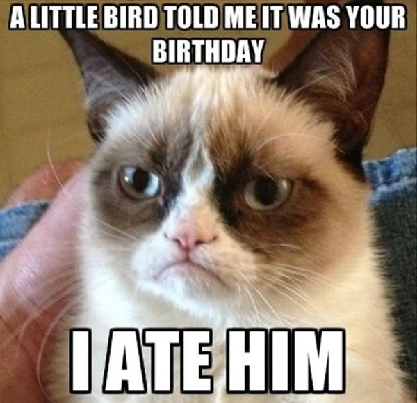 grumpy cat: a little bird told me it was your birthday. I ate him.