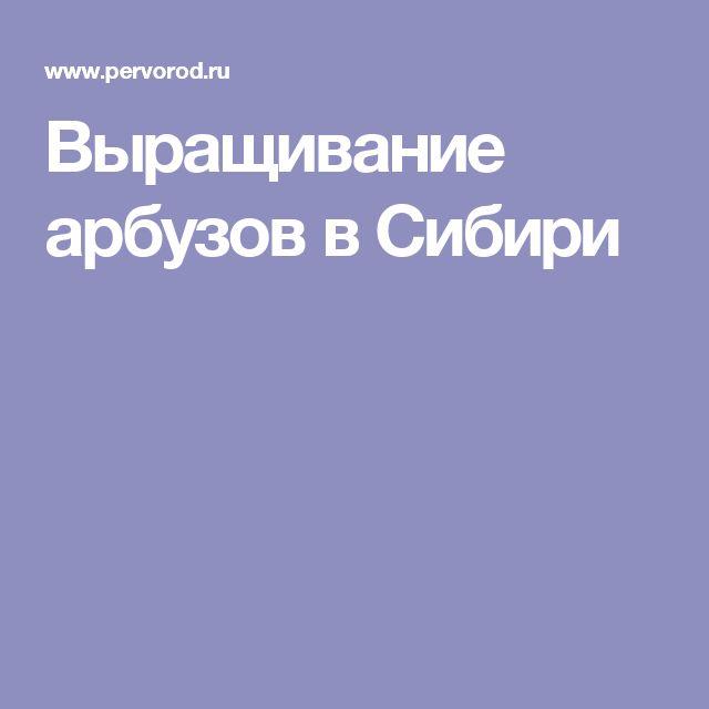 Выращивание арбузов в Сибири