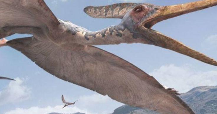 Μογγολία: Απολιθώματα ενός άγνωστου είδους πτερόσαυρου ανακαλύφθηκαν σε έρημο