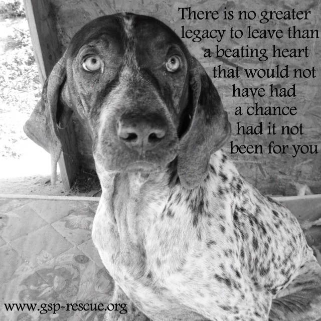 This is dedicated to all those who volunteer, rescue, foster and adopt! You make a difference! www.gsp-rescue.org