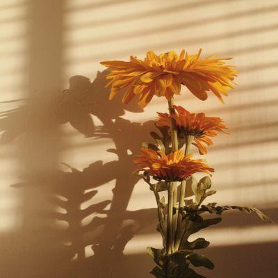 - ̗̀ You Are My Sunshine ̖́-