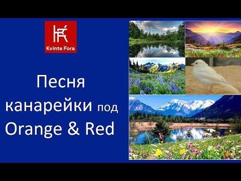 (6) Песня Канарейки и Orange & Red / Музыка и природа / Kvinte Fora - YouTube