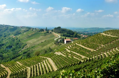 The land of Friuli: home of some of the most prestigious world's white wines.
