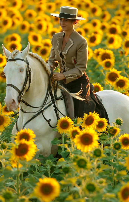 "Horse riding in the sunflower field. Cremello Andalusian ""Sasou"" | Kenzie Dylsi http://kenzie-dysli.de/sasou.html"