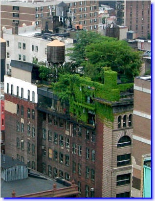 Multi-level building in Denver with a green roof.