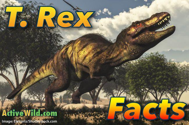 25 Best Ideas About Tyrannosaurus Rex Facts On Pinterest