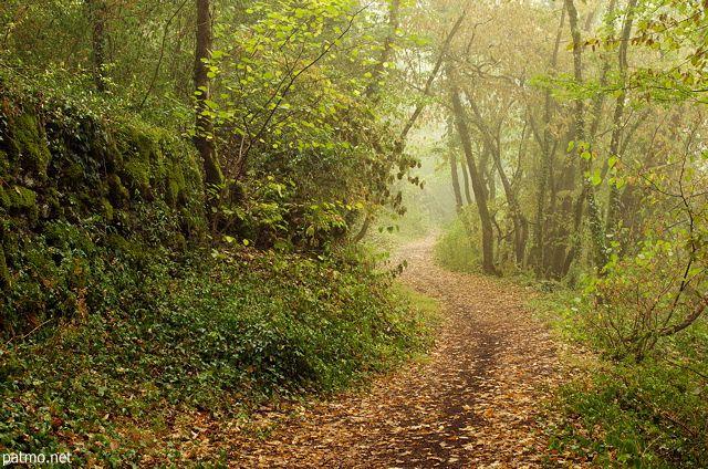 Image de la forêt en fin d'été avec des couleurs chaudes et une légère brume matinale